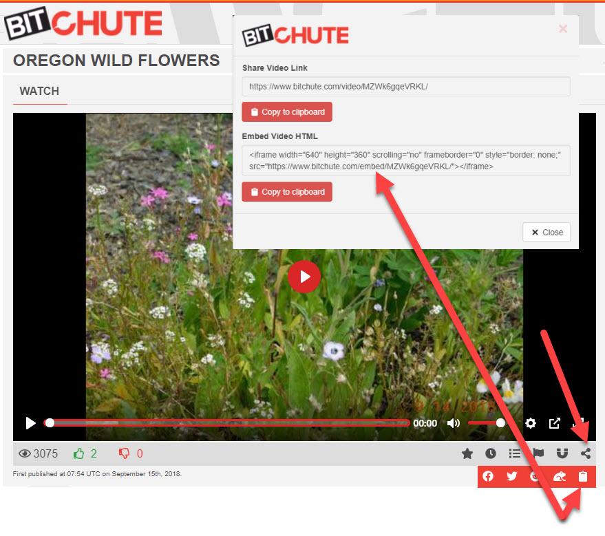 bitchute video