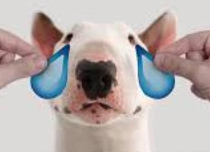 bull terrier cbd relief